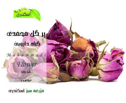 گل محمدی ، خرید اینترنتی گل محمدی ، Damask rose
